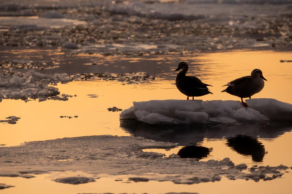 野鳥-28.jpg