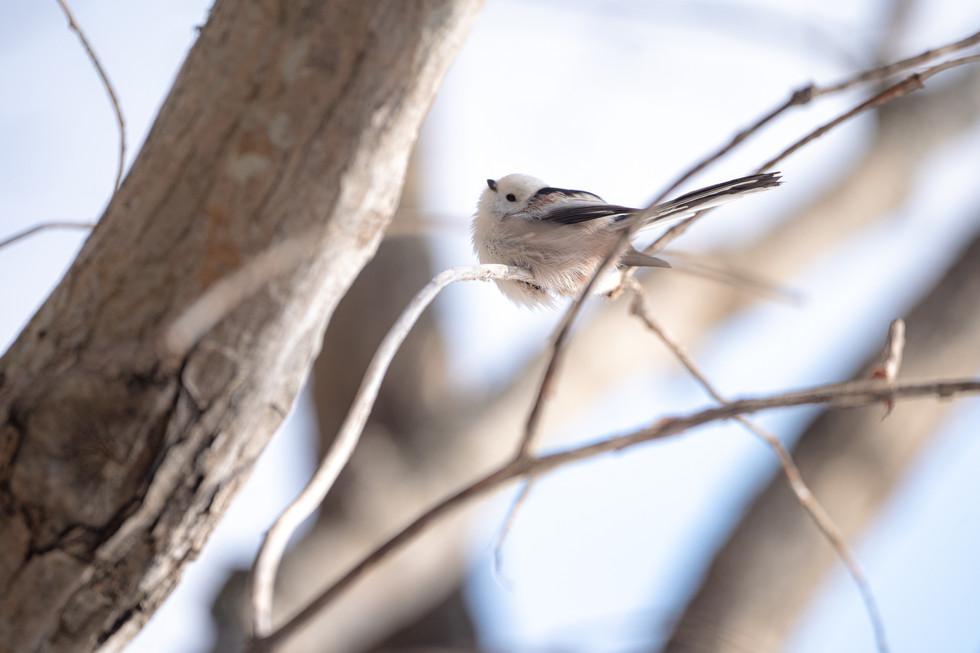 野鳥-19.jpg