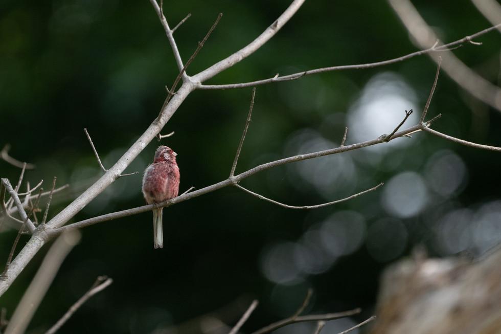 野鳥-8.jpg