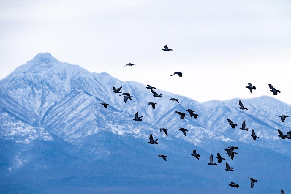 野鳥-20.jpg
