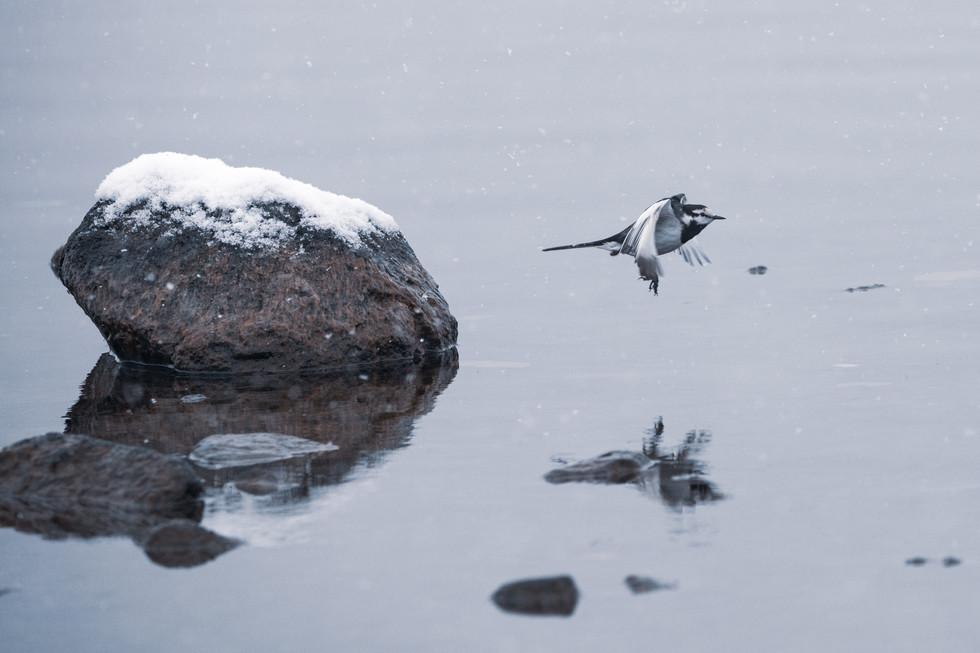 野鳥-29.jpg