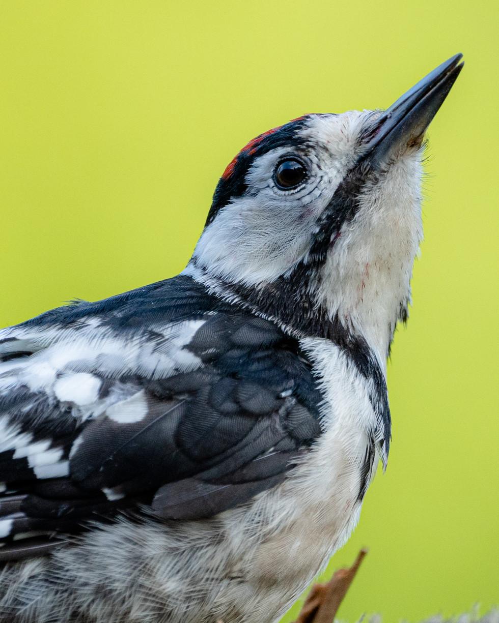 野鳥-6.jpg