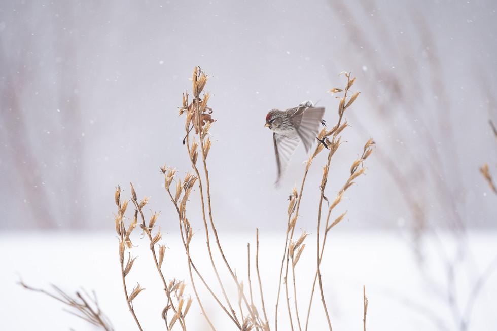 野鳥-26.jpg