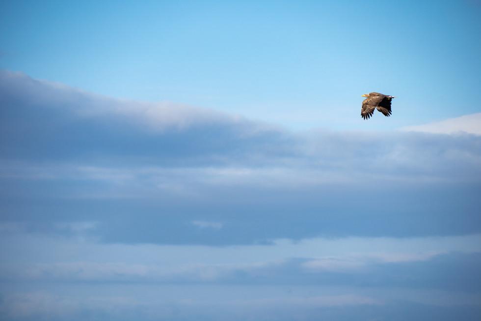 野鳥-2.jpg