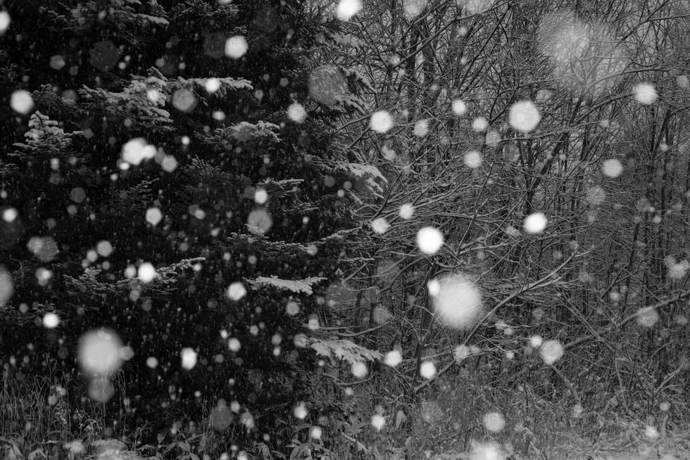 冬-16.jpg