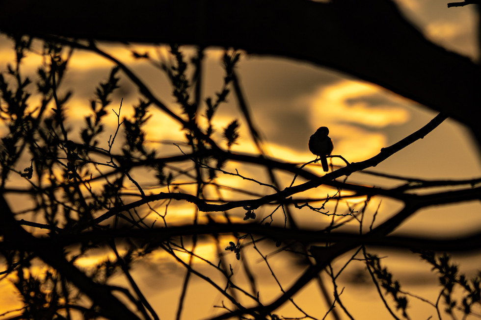 野鳥-3.jpg