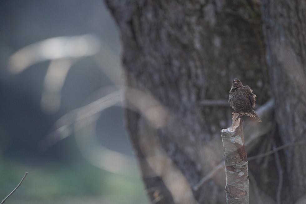 野鳥-32.jpg