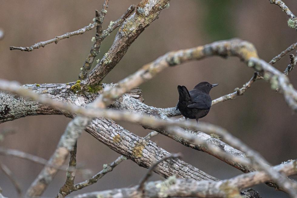 野鳥-10.jpg