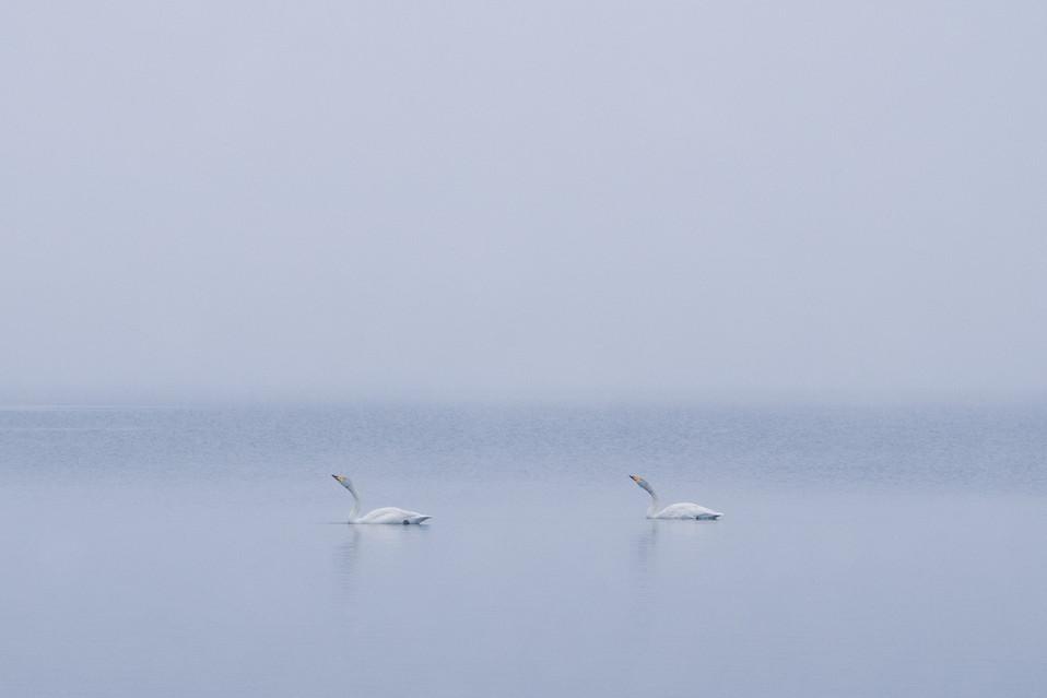 白鳥-60.jpg