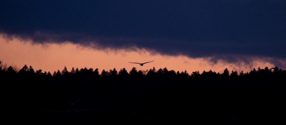 野鳥-25.jpg