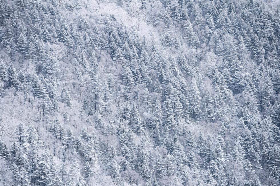 冬-21.jpg