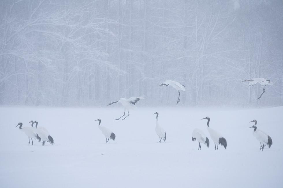 野鳥-21.jpg