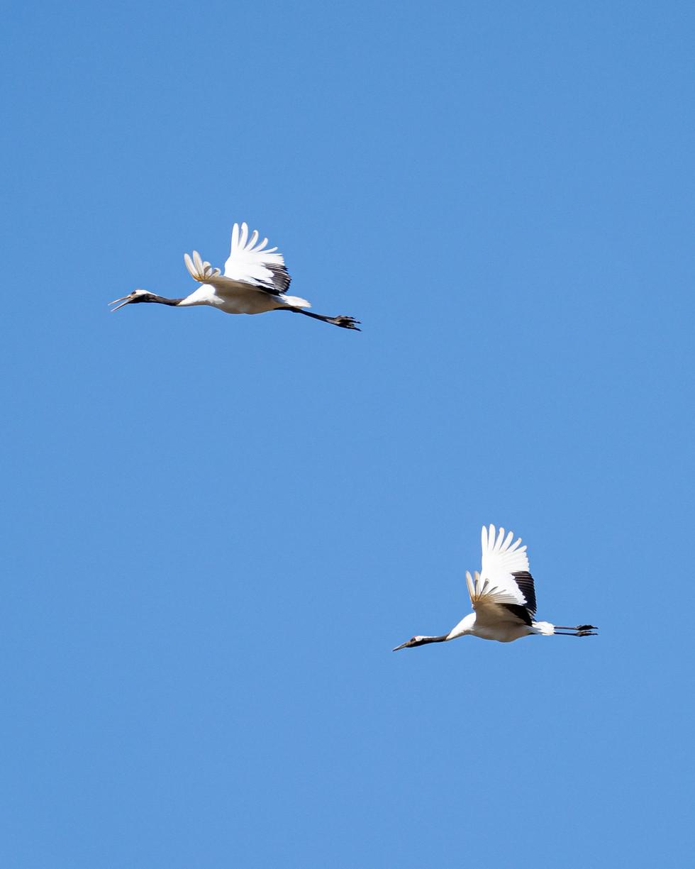 野鳥-13.jpg