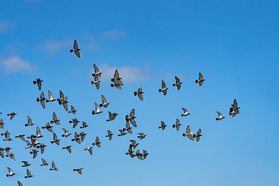 野鳥-5.jpg