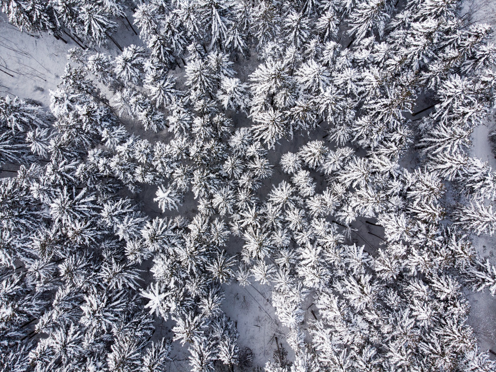 冬-26.jpg