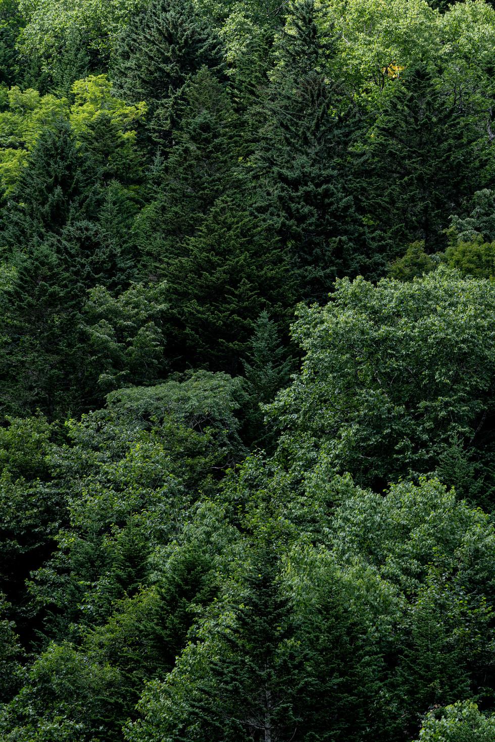 自然にあるデザイン-22.jpg