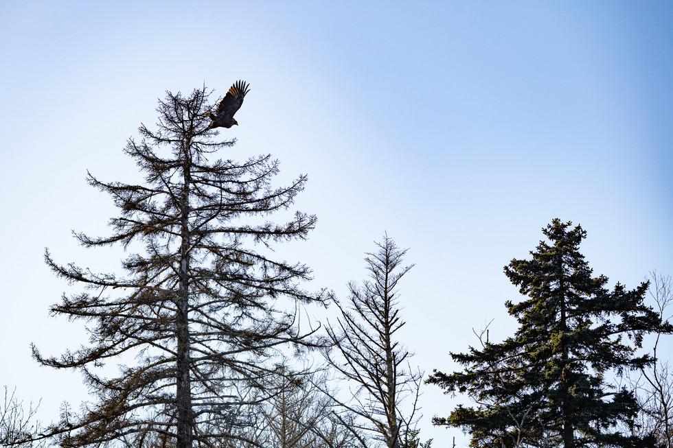野鳥-14.jpg
