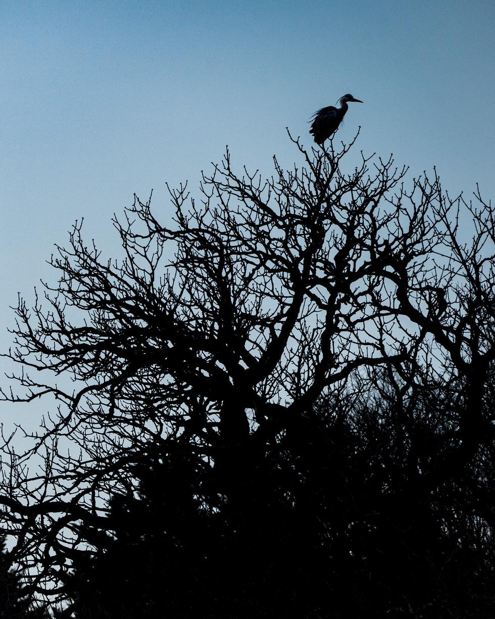 野鳥-30.jpg