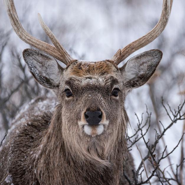 northern wild animals