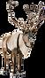 Reindeer%201_edited.png