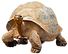 Tortoise-7_edited.png