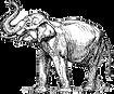 Elephant_edited_edited.png