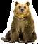Bear_4.png