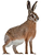 March%20Hares%202_edited.png