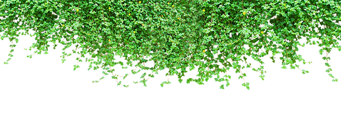 kisspng-vine-tiger-green-climbing-tiger-wall-plant-5a6ae0a01581b1_edited.png