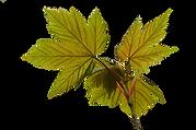 Autumn-Leaves-Spring-Leaf-CableAutumn-Le