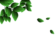 —Pngtree—green leaves png material fresh