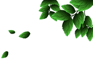 —Pngtree—green leaves png material fresh_4589707.png