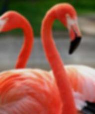 Flamingos cerca