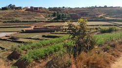 paysage de rizière aux abords de l