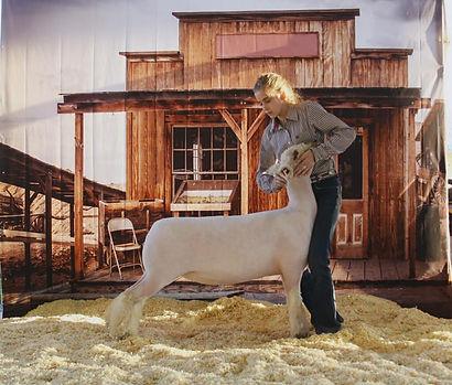 Ch. Southdown Show A Midwest Sheep Showdown - Brady Baker.jpg