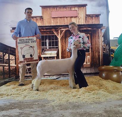 Fifth Overall Ewe Show A & B Midwest Sheep Showdown - Alyssa Stillman.jpg