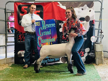 Reserve Overall Ewe Show A&B Noble County - Kendal Rosen.jpg