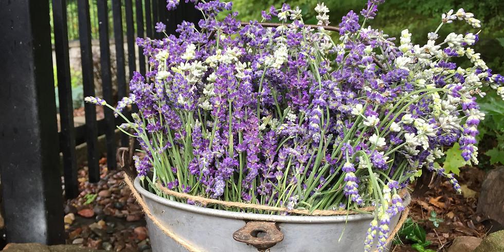 10 am U-Pick Lavender Class