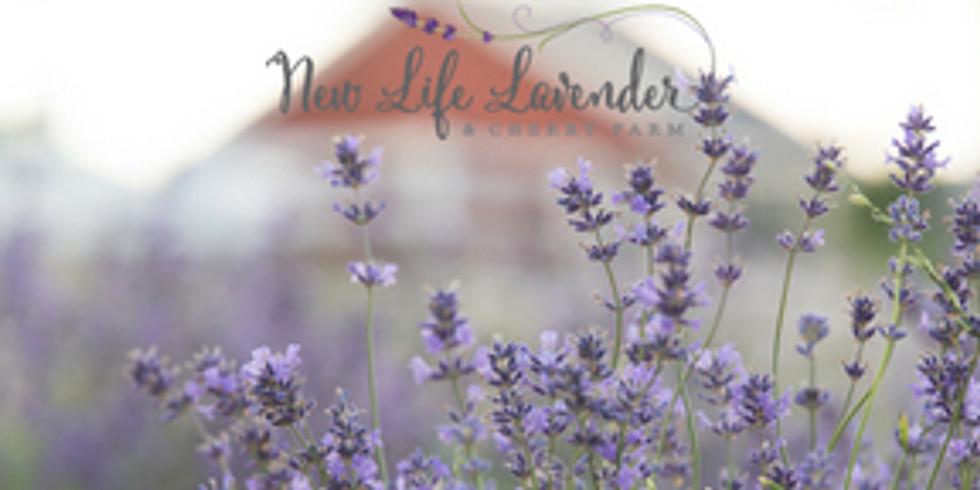 9:30 am July 6- Kids Lavender Propagation Activity