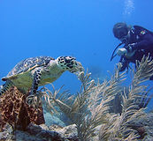 scuba diver with a sea turtle