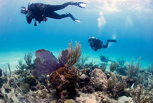 diving the wall at davis bay in st. croix