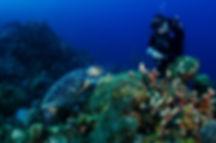 scuba diver with a sea turtle