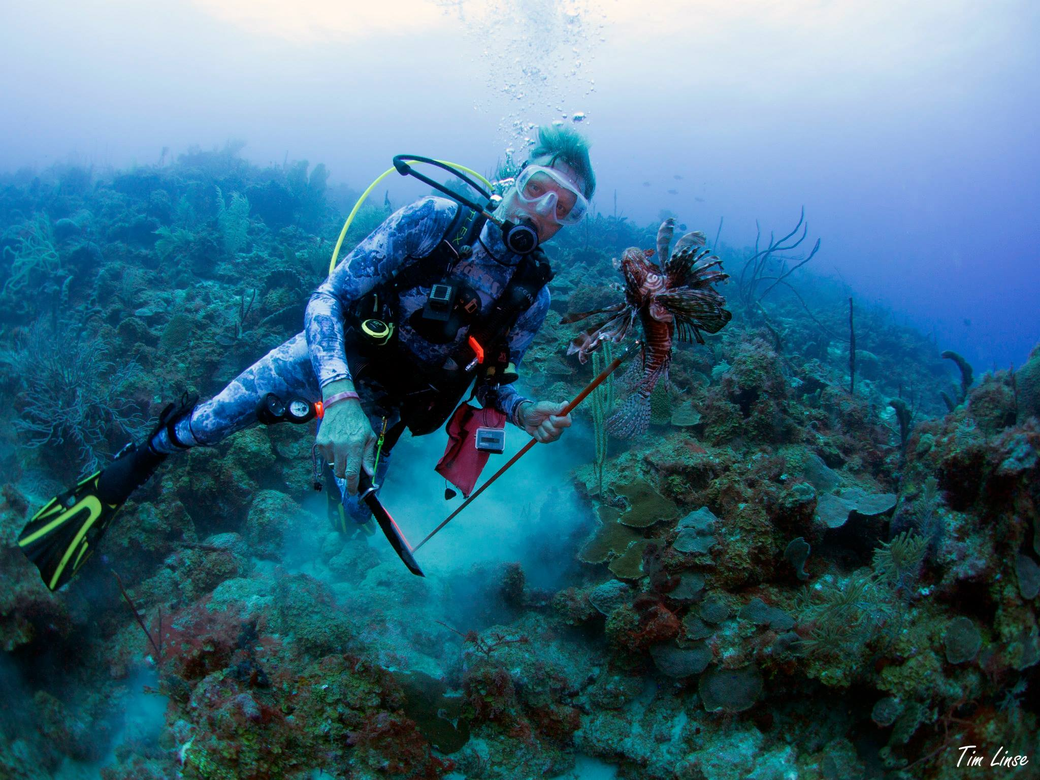Spearing lionfish on the Wall