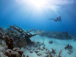 a scuba diver and coral at davis bay