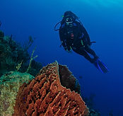 scuba diver with coral on a wall