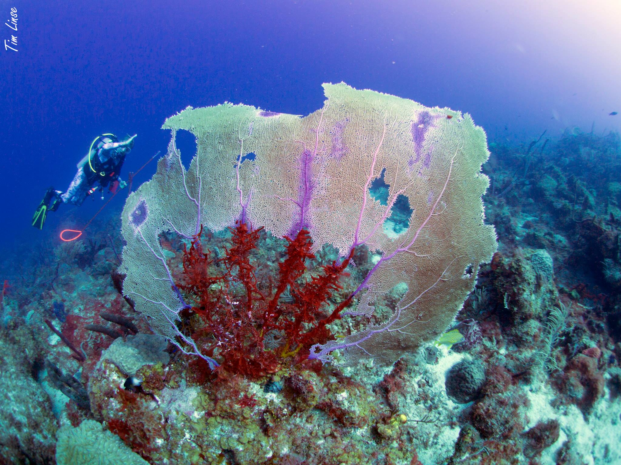 Sea Fan at Davis Bay