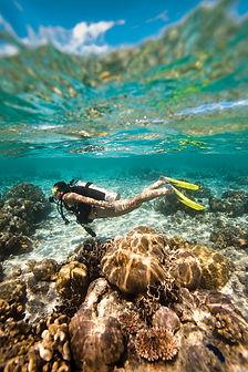 Shallow ocean dive