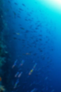 school of fish on st. croix's wall