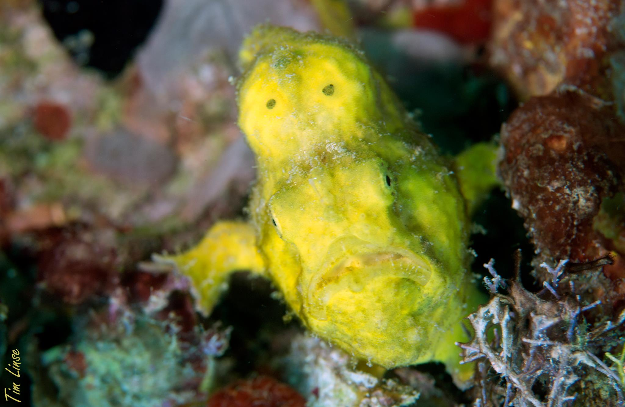 a frog fish at the pier
