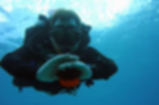a solo diver over the reef